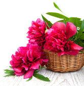 叶朵朵粉红牡丹 — 图库照片