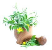Mortar with herb — Stock Photo