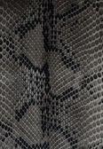 Snake skin — Stock Photo