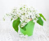 Bouquet von weißen flieder — Stockfoto