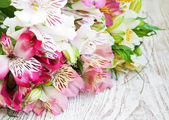 Bouquet of alstroemeria flowers — Stock Photo
