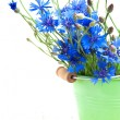 Cornflower — Stock Photo #27333127