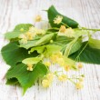 Stock Photo: Linden flowers