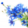 Cornflower — Stock Photo #29869393