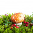 Forest mushroom in moss — Stock Photo