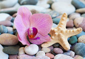 Beach stones — Stock Photo