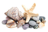 Small heap of sea stones and beige cockleshell — Stock Photo