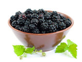 Bowl of Blackberries — Stock Photo