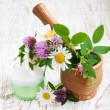 Stock Photo: Wild flowers and herbs