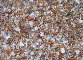 Shell sand background — Stock Photo