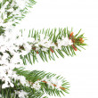 Snowflake ornament on a Christmas tree — Stock Photo