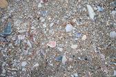 Shell sand background — Stock Photo