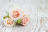 Light Pink roses — Stock Photo