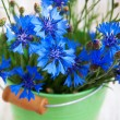Cornflower — Stock Photo #38145971