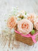 Light Pink roses — Stock Photo