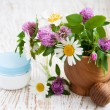 Stock Photo: Wild Flowers Daisies and Clover