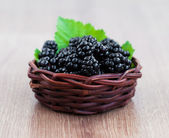 Basket of Blackberries — Stock Photo
