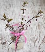 Cherry blossom — Stok fotoğraf
