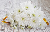 White Chrysanthemum — Stock Photo