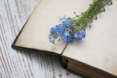 Forget-me-nots flowers and old book — Stockfoto