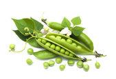 Fresh Garden Peas — Stock Photo