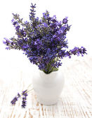 Lavender flowers in a white vase  — Stock Photo