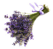 связка цветов лаванды — Стоковое фото