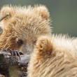Bear mirror — Stock Photo #12740224
