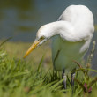 Stock Photo: Image of white bird
