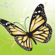 Image of a butterfly — Stock Photo