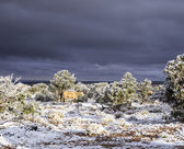 暗い空とアリゾナ州の雪の馬 — ストック写真