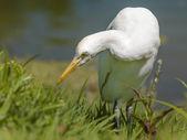 Image of a white bird — Stock Photo