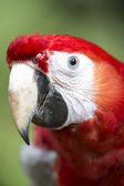 Parrots beak — Stock Photo