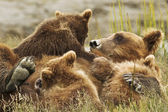Three bear cubs — Stock Photo