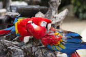 Two parrots perched on the branch — Stock Photo