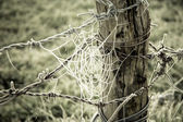 Spiderweb frozen and barbed wire in a wooden trunk on green gras — Stock Photo