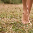 Young female legs walking on the grass — Stock Photo