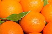 Tasty valencian oranges freshly collected — Foto de Stock