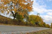 Way trees autumn — Stock Photo