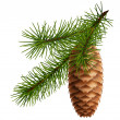 Vector de stock : Pine cone with branch