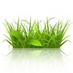 green gras — Stockvector