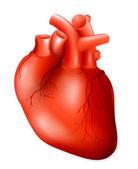 Human heart, eps10 — Stock Vector