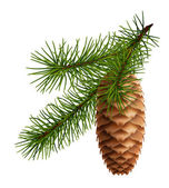 Pine cone with branch — Vector de stock