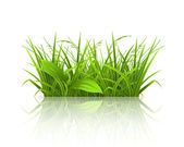 Green grass — Stock Vector