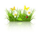 Spring grass — Stock Vector