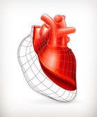 Heart structure, vector — Stock Vector