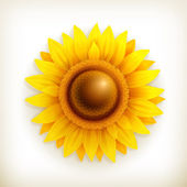 Sunflower, vector — Stock Vector