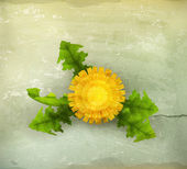 Yellow Dandelion, old-style — Stock Vector
