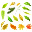 Leaf collection, vector — Stock Vector