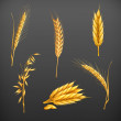 Wheat vector set — Stock Vector #19320991